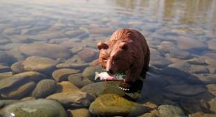 12 Point Buck: Wild Wild Life
