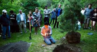 Terence Koh Plants Poignant Gestures at the McMichael