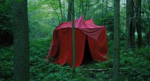Darren Rigo : The Woods