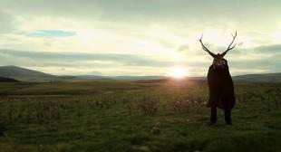 Jillian McDonald: Valley of the Deer