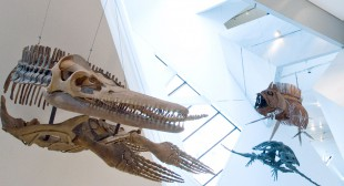 New ROM Director: Art as Well as Dinosaurs