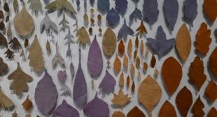 Thea Haines: Artist's Palette Community Dye Garden