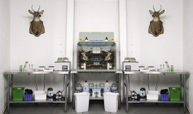 Jennifer Willet: Laboratory Ecologies