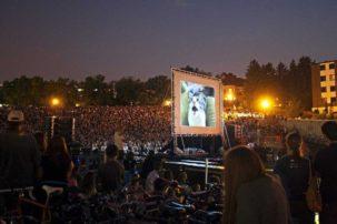 Internet Cat Video Festival to Tour Canada
