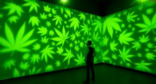 Hotboxing the White Cube: The Rise of Cannabis Culture in High Art